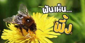 ฝันเห็นผึ้ง แมลงต่อย