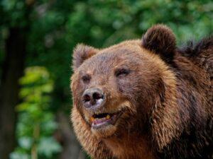 ฝันเห็นหมีตัวใหญ่